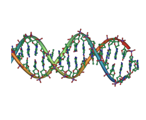 https://en.wikipedia.org/wiki/File:DNA_double_helix_horizontal.png